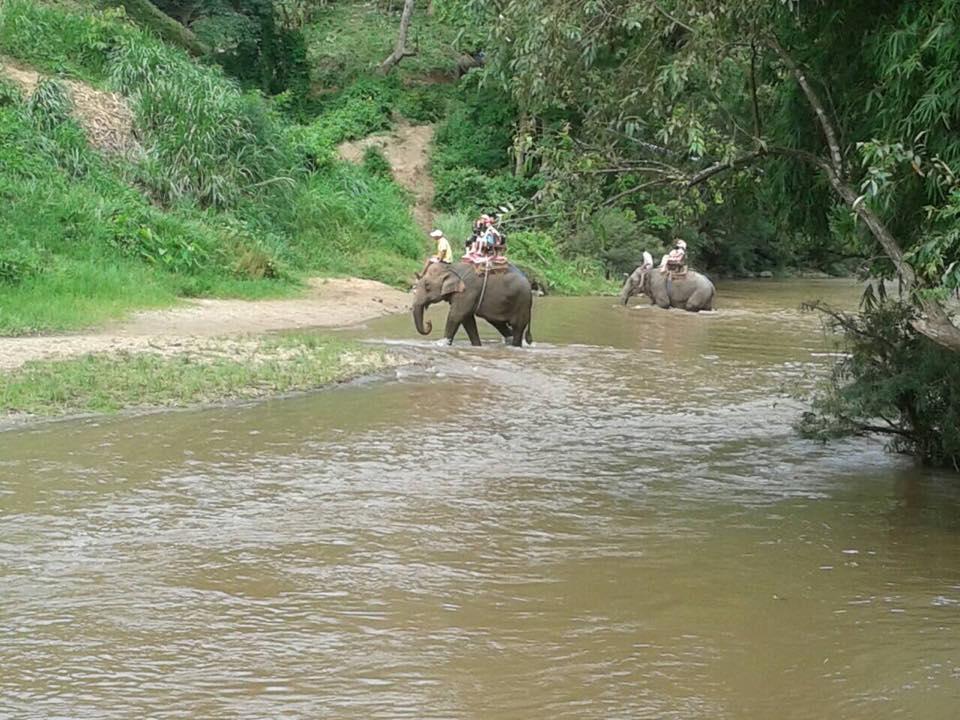 Elephant Safari Tour